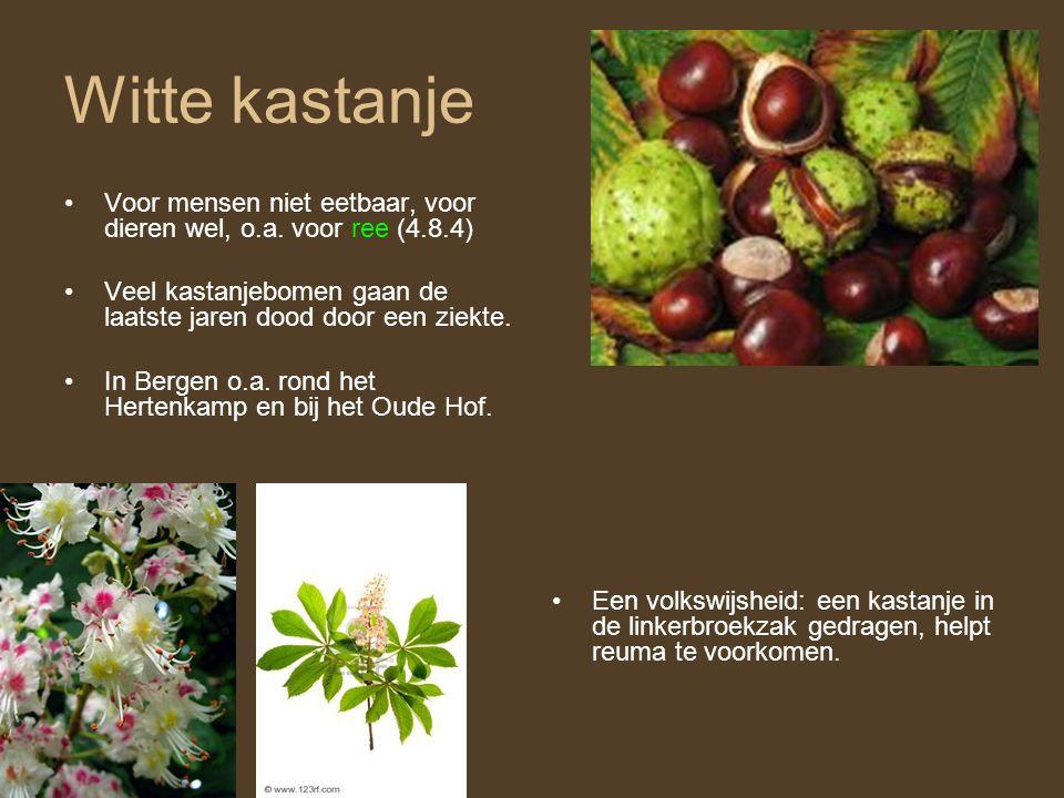 Witte kastanje Voor mensen niet eetbaar, voor dieren wel, o.a. voor ree (4.8.4) Veel kastanjebomen gaan de laatste jaren dood door een ziekte.