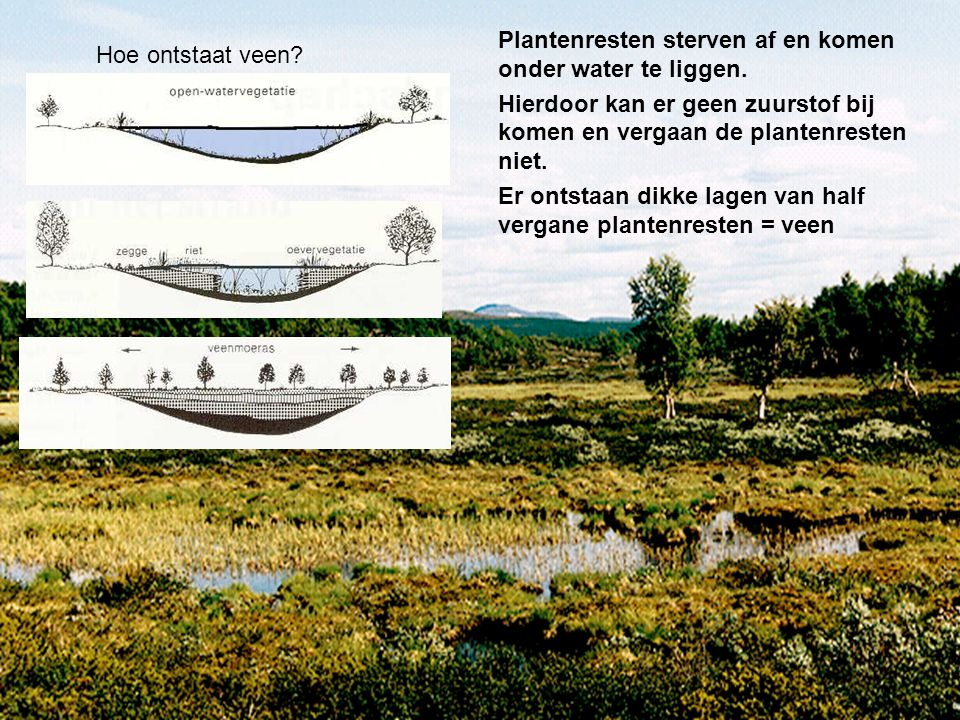 Plantenresten sterven af en komen onder water te liggen.