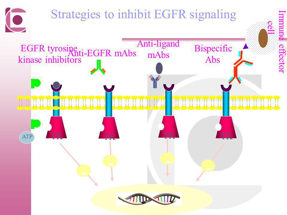 - - - - Strategies to inhibit EGFR signaling Anti-ligand mAbs