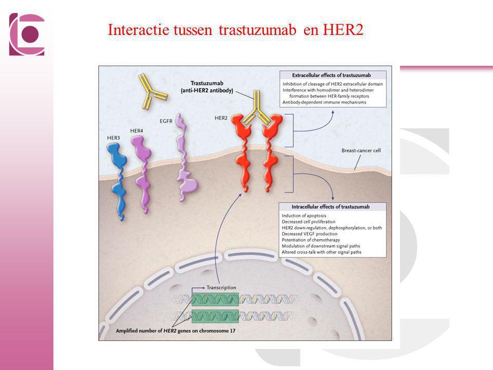 Interactie tussen trastuzumab en HER2