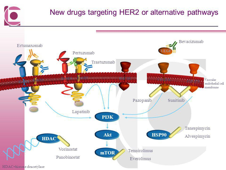 New drugs targeting HER2 or alternative pathways