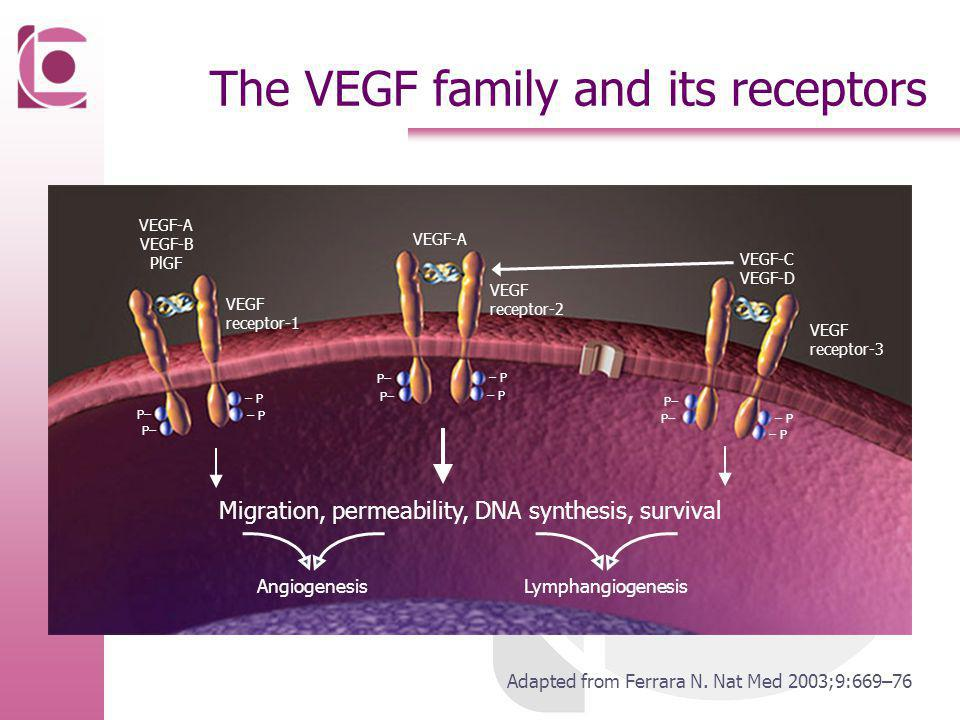 The VEGF family and its receptors