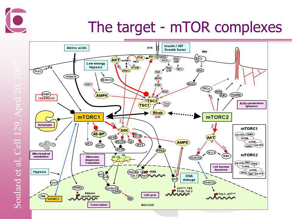 The target - mTOR complexes