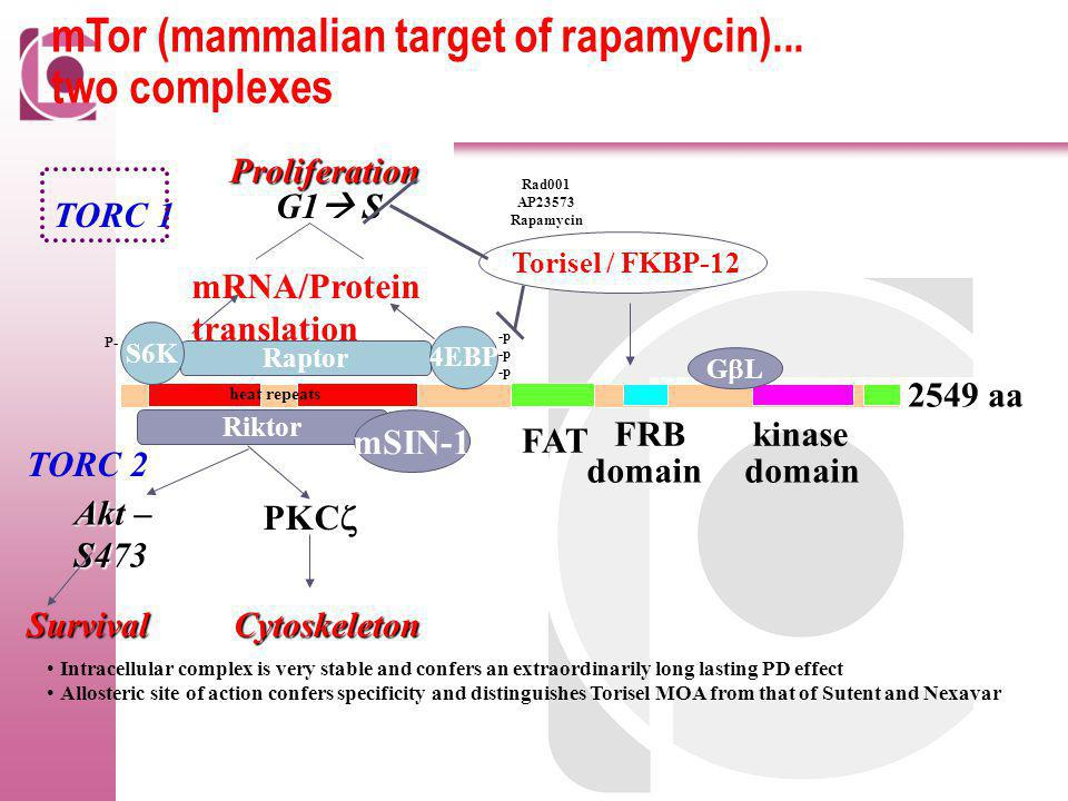 mTor (mammalian target of rapamycin)... two complexes