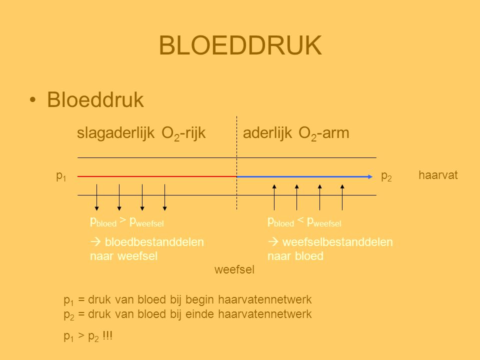 BLOEDDRUK Bloeddruk slagaderlijk O2-rijk aderlijk O2-arm p1 p2 haarvat