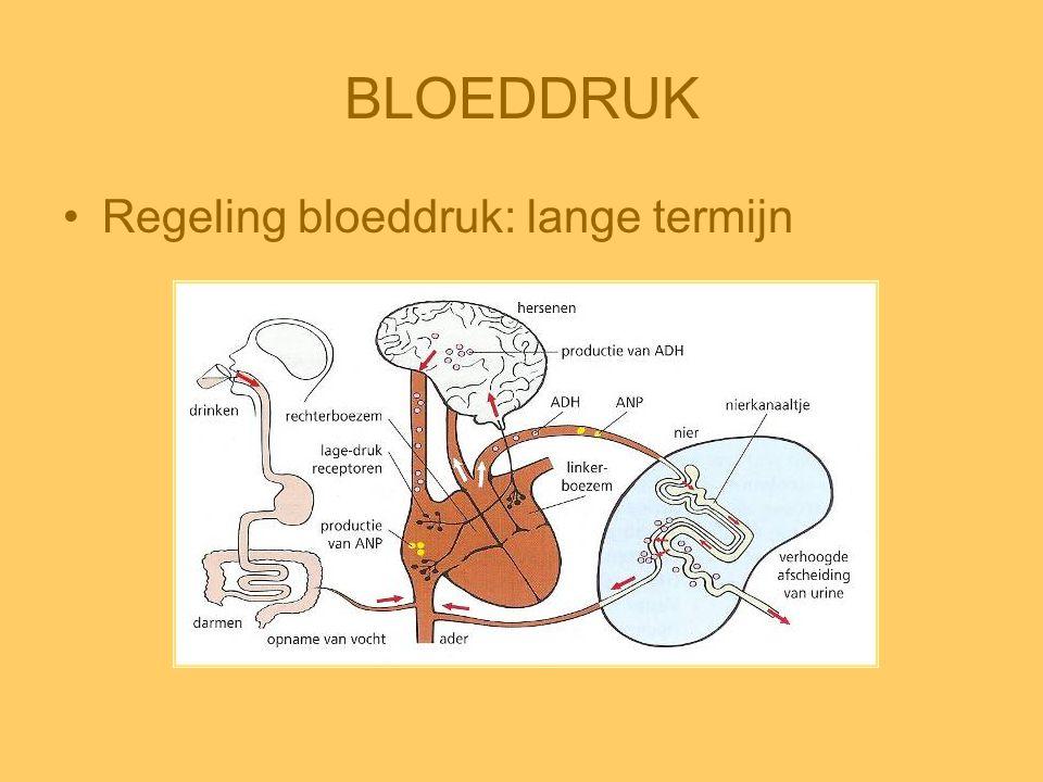 BLOEDDRUK Regeling bloeddruk: lange termijn