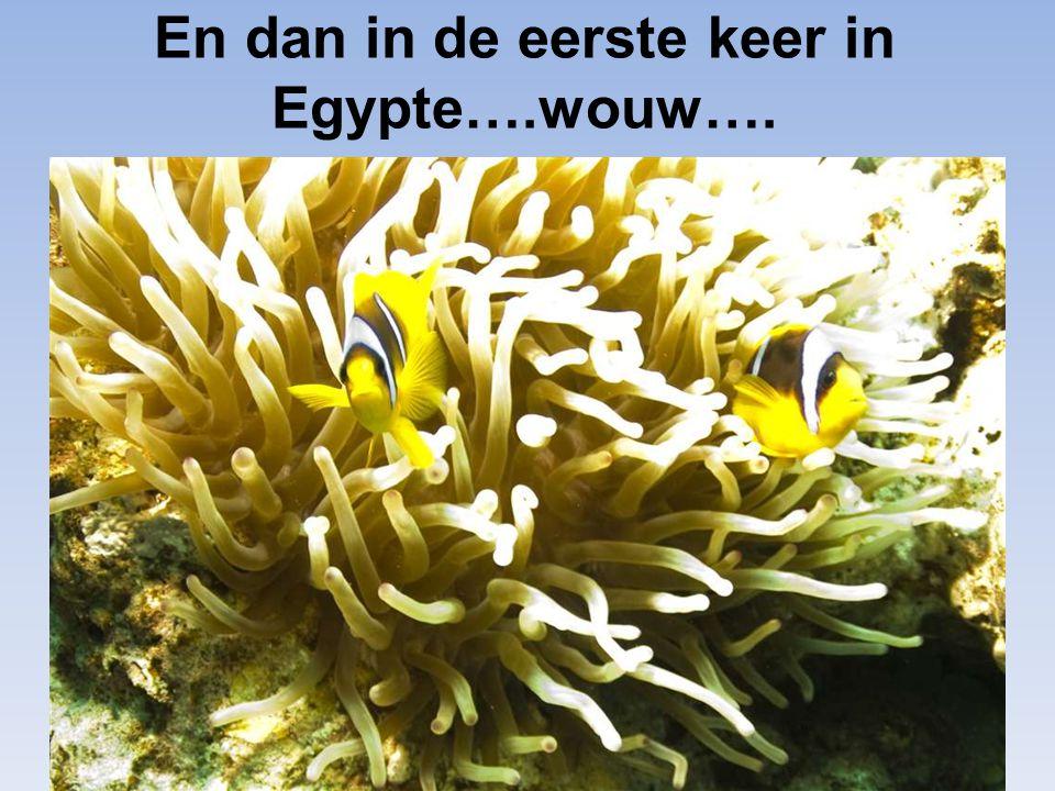 En dan in de eerste keer in Egypte….wouw….