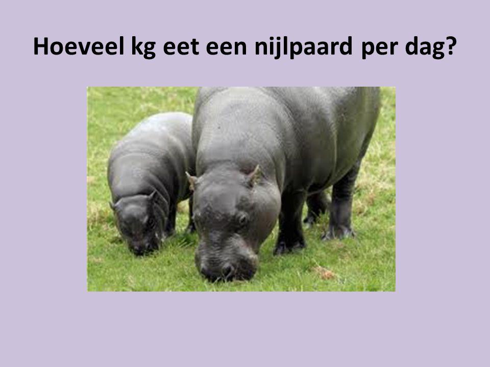 Hoeveel kg eet een nijlpaard per dag