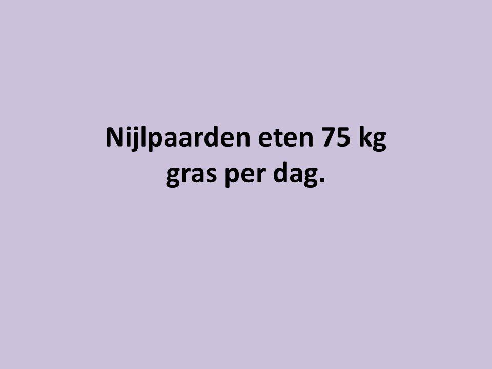 Nijlpaarden eten 75 kg gras per dag.