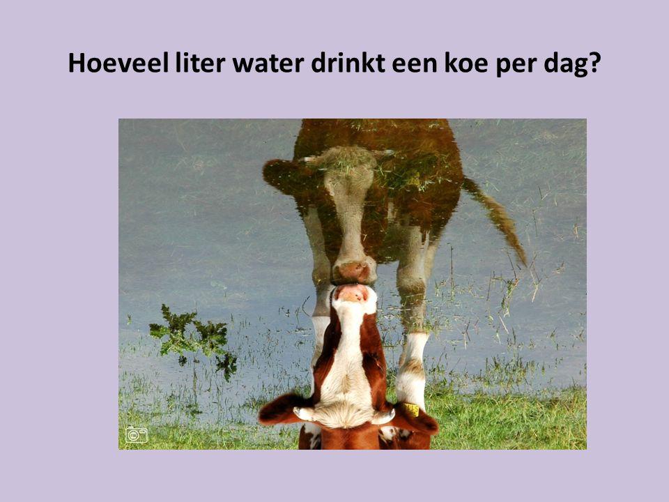 Hoeveel liter water drinkt een koe per dag