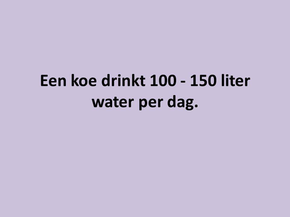 Een koe drinkt 100 - 150 liter water per dag.