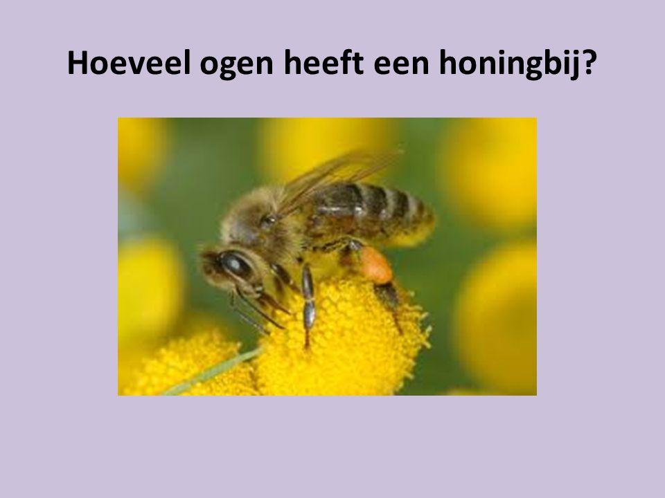 Hoeveel ogen heeft een honingbij