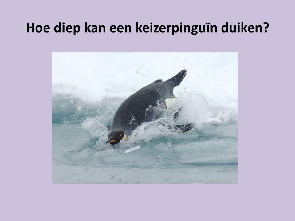 Hoe diep kan een keizerpinguïn duiken