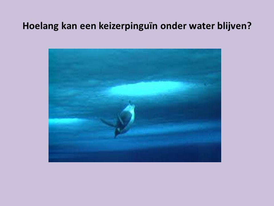 Hoelang kan een keizerpinguïn onder water blijven