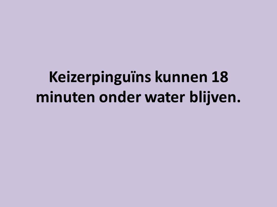 Keizerpinguïns kunnen 18 minuten onder water blijven.