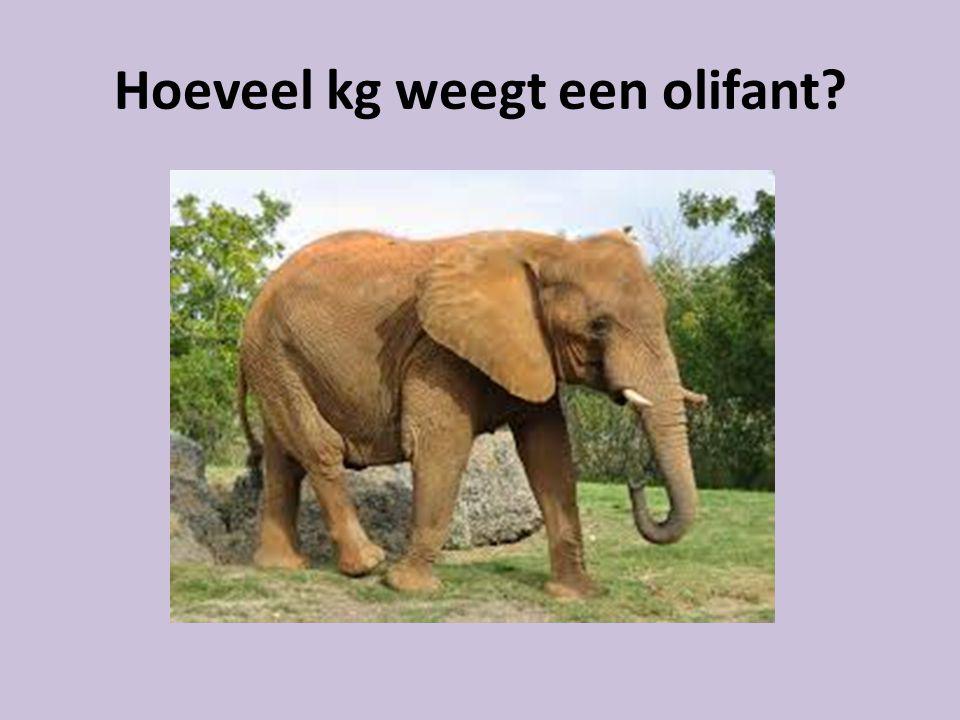 Hoeveel kg weegt een olifant