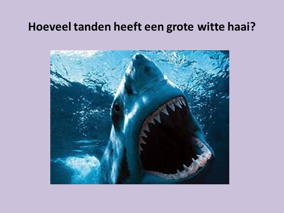 Hoeveel tanden heeft een grote witte haai
