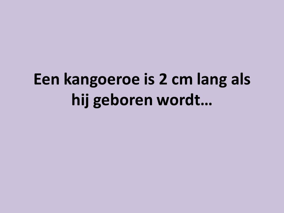 Een kangoeroe is 2 cm lang als hij geboren wordt…