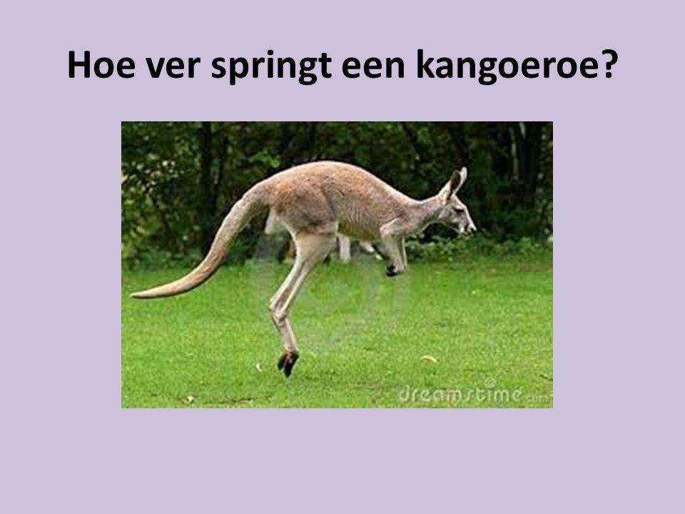 Hoe ver springt een kangoeroe