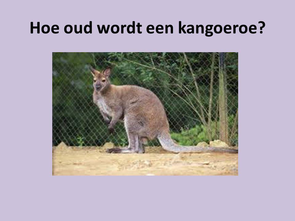 Hoe oud wordt een kangoeroe