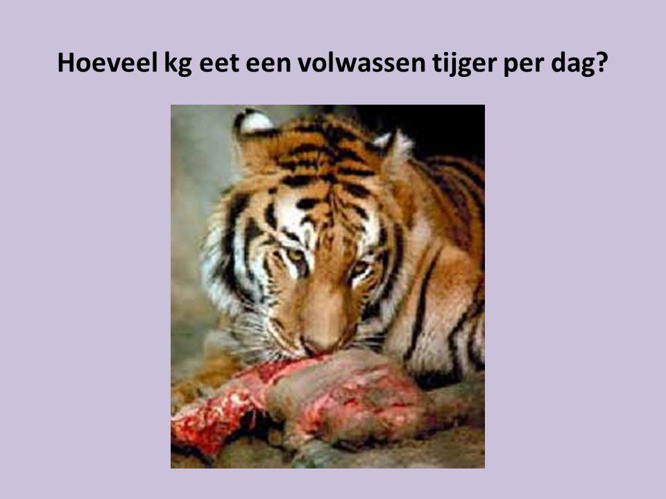 Hoeveel kg eet een volwassen tijger per dag