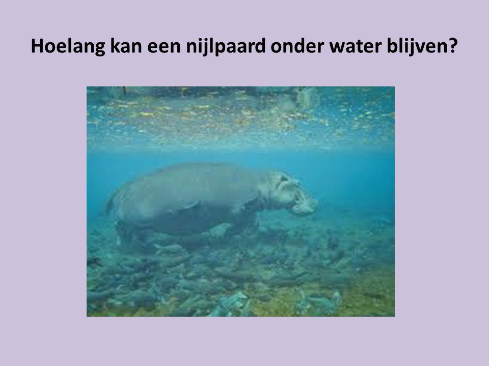 Hoelang kan een nijlpaard onder water blijven