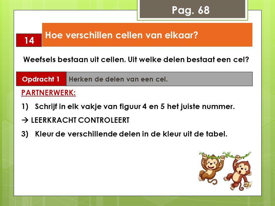Pag. 68 Hoe verschillen cellen van elkaar 14