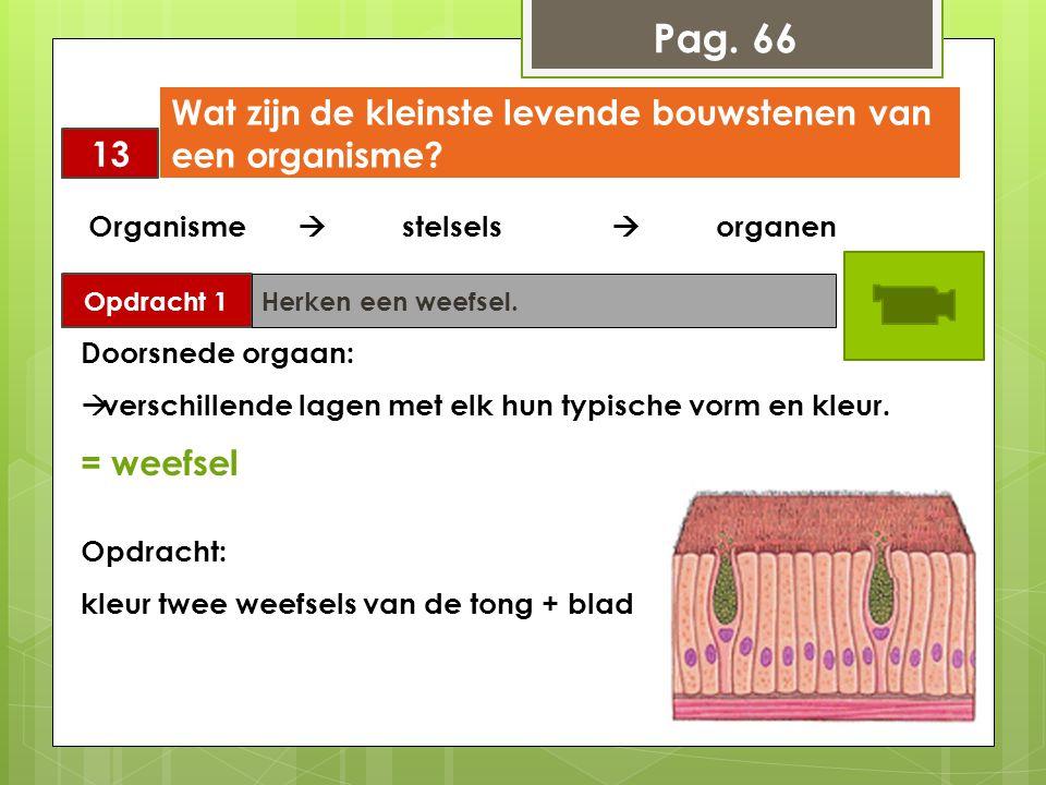Pag. 66 Wat zijn de kleinste levende bouwstenen van een organisme 13