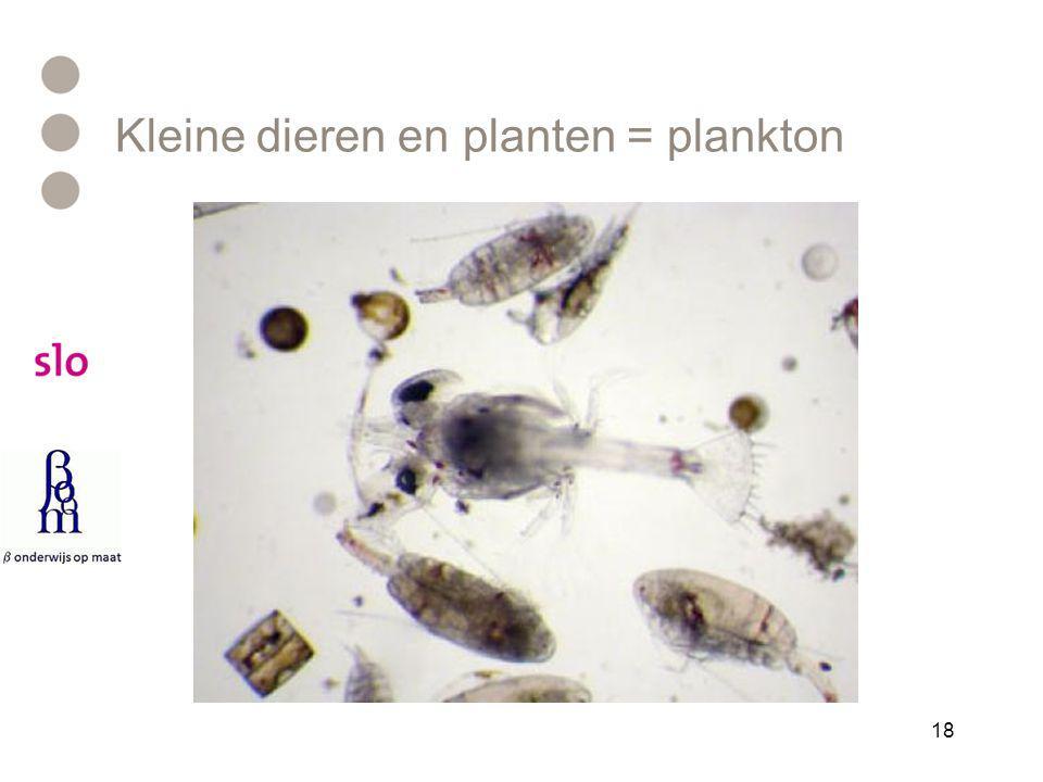 Kleine dieren en planten = plankton