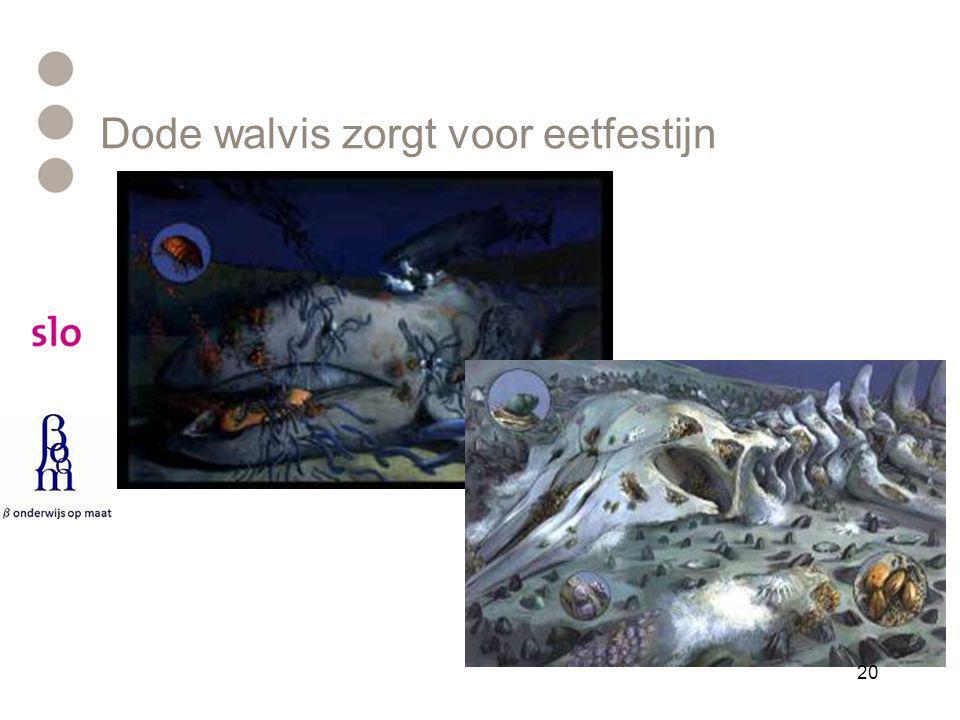 Dode walvis zorgt voor eetfestijn