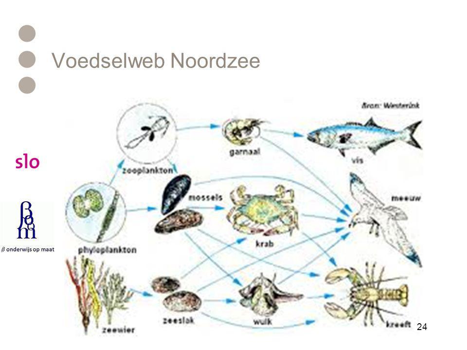 Voedselweb Noordzee