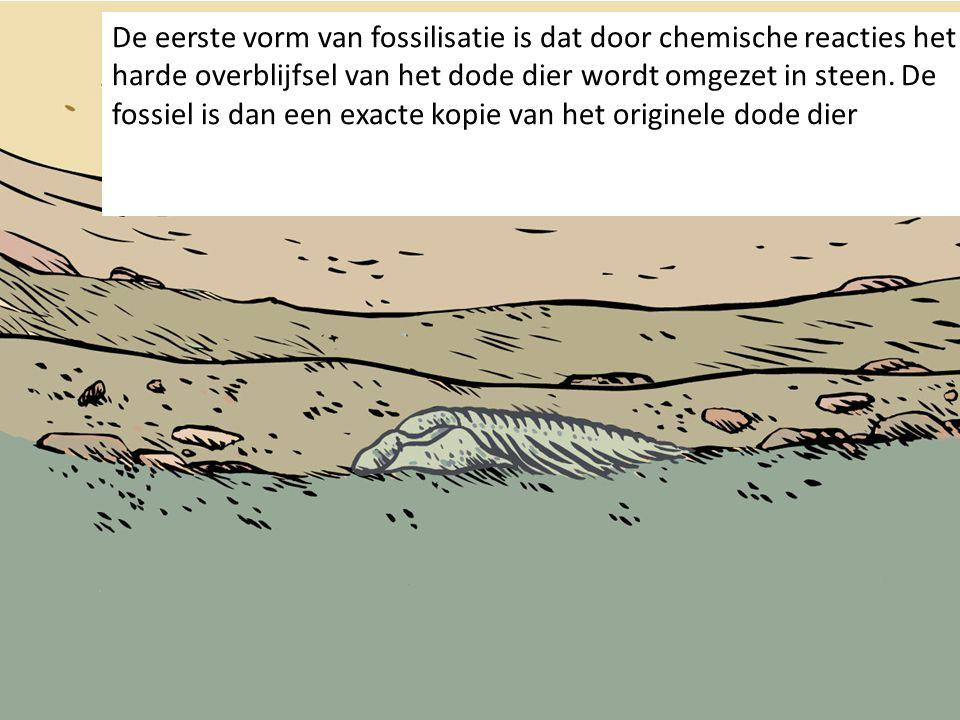 De eerste vorm van fossilisatie is dat door chemische reacties het harde overblijfsel van het dode dier wordt omgezet in steen.