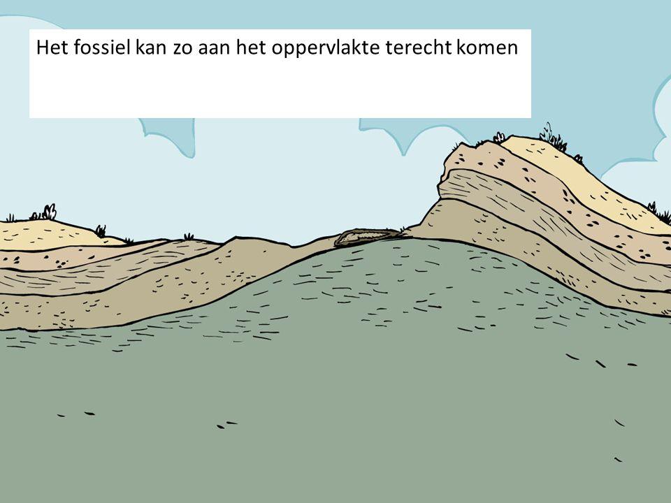 Het fossiel kan zo aan het oppervlakte terecht komen