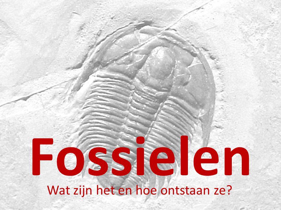 Fossielen Wat zijn het en hoe ontstaan ze