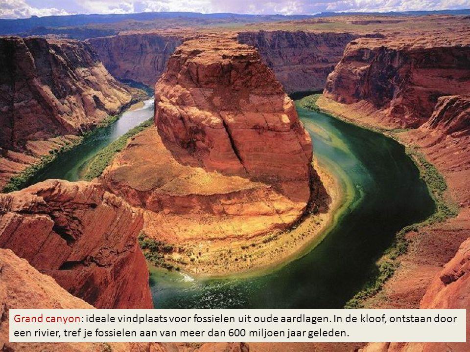 Grand canyon: ideale vindplaats voor fossielen uit oude aardlagen