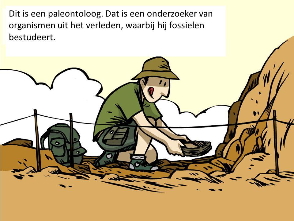 Dit is een paleontoloog
