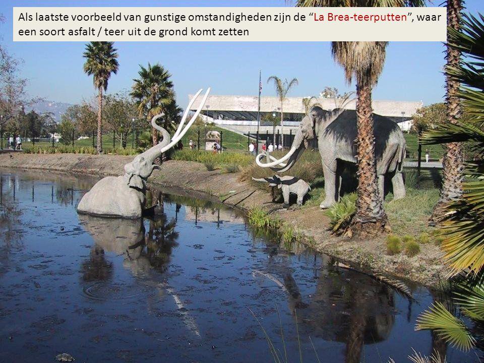Als laatste voorbeeld van gunstige omstandigheden zijn de La Brea-teerputten , waar