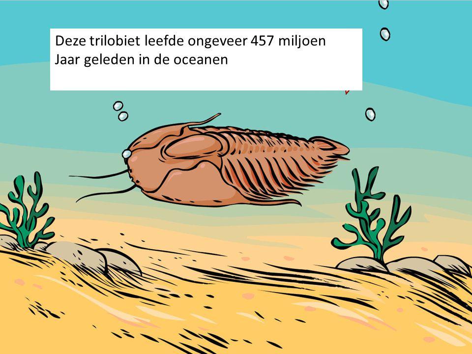 Deze trilobiet leefde ongeveer 457 miljoen