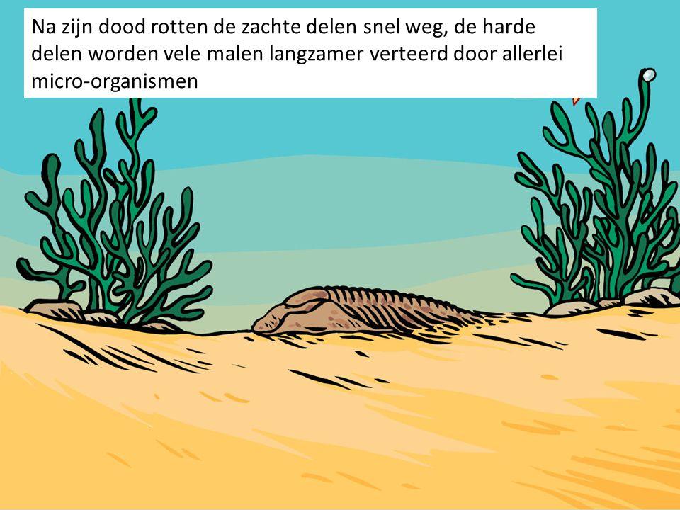 Na zijn dood rotten de zachte delen snel weg, de harde delen worden vele malen langzamer verteerd door allerlei micro-organismen