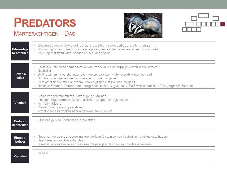 Predators Marterachtigen – Das