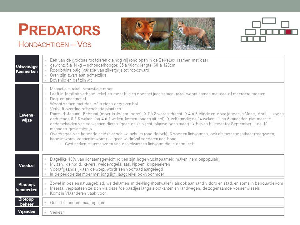 Predators Hondachtigen – Vos