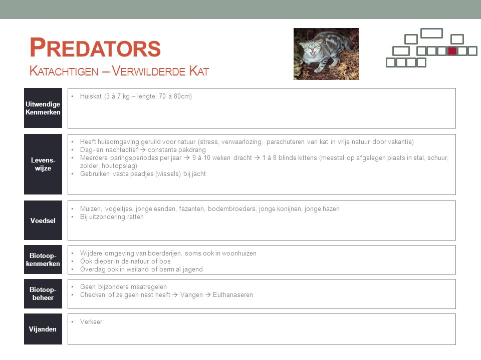 Predators Katachtigen – Verwilderde Kat