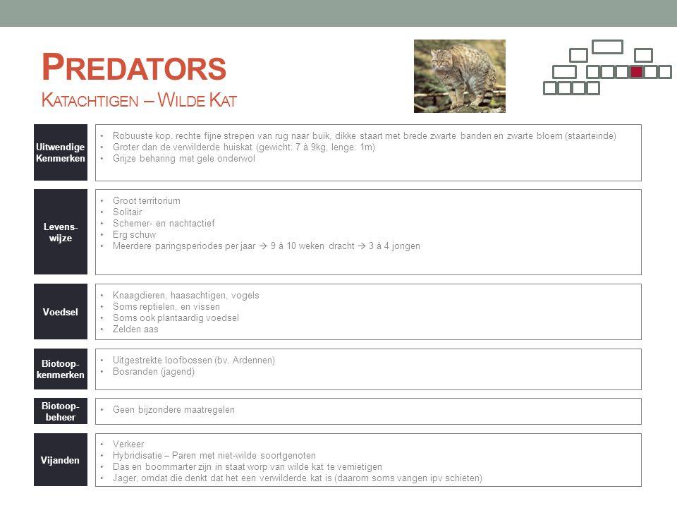 Predators Katachtigen – Wilde Kat