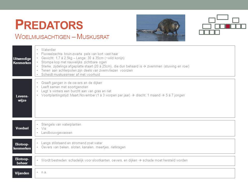 Predators Woelmuisachtigen – Muskusrat