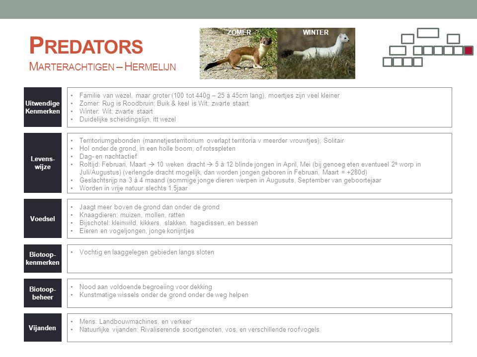 Predators Marterachtigen – Hermelijn