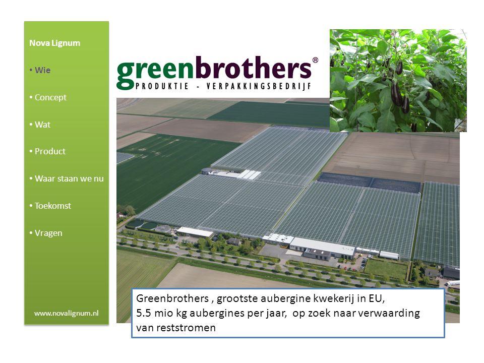Greenbrothers , grootste aubergine kwekerij in EU,