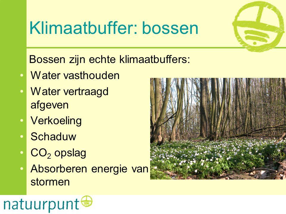Klimaatbuffer: bossen