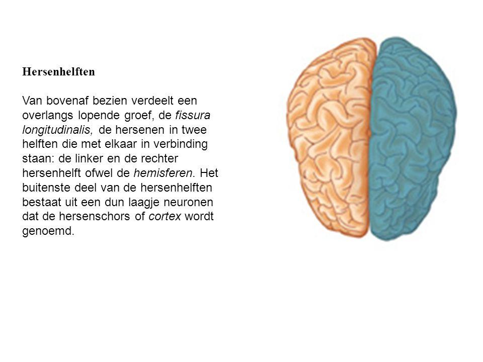 Hersenhelften