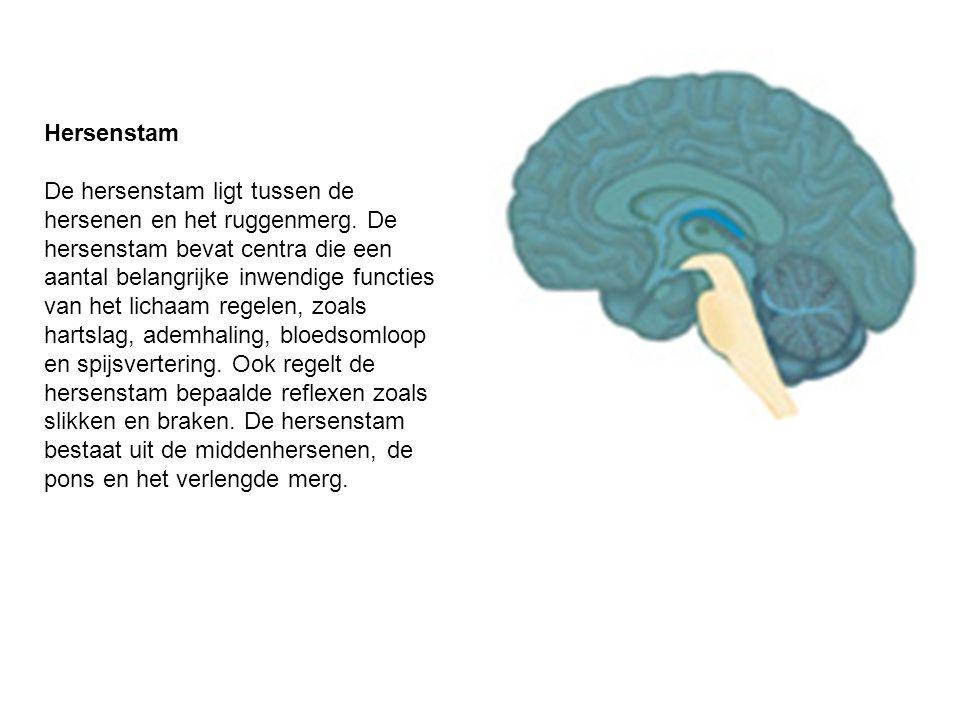 Hersenstam