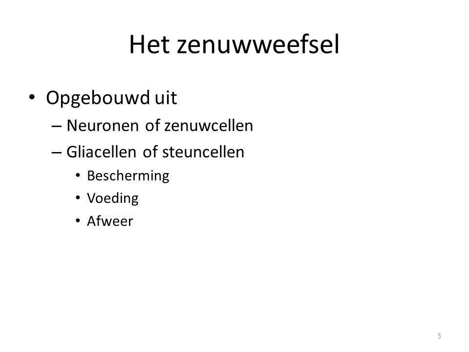 Het zenuwweefsel Opgebouwd uit Neuronen of zenuwcellen